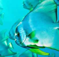 Наука о рыбах — ихтиология