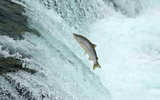 Рыбы, которые выпрыгивают из воды. Почему рыбки выпрыгивают из аквариума
