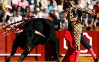 Игры с быками в испании называется. Игра на грани жизни и смерти или где всё ещё можно посмотреть корриду в Испании