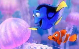 Рыбок память 3 секунды. Какая память у рыбки. Как работает память рыб