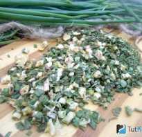 Как правильно сушить зеленый лук на зиму. Лук зеленый сушеный — как сушить на зиму и хранить в домашних условиях