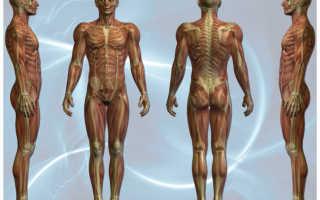Тесты для определения физических качеств