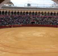 Быки испания как называется. Что такое коррида? Все о корриде в Испании