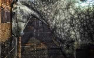 Как спят лошади: стоя или лежа — узнаем все секреты. Правда ли, что лошади спят стоя