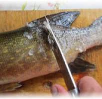 Есть ли у щуки чешуя. Как чистить щуку от чешуи и внутренностей. Как почистить и разделать рыбу: инструкции с пошаговыми фотографиями