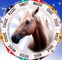 Каким будет год петуха для лошади