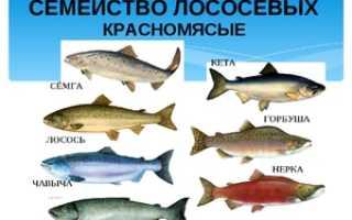 Рыба лосось и горбуша. Чем отличается кета от горбуши. Если кость от рыбы застряла в горле