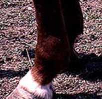 Необычные отметины у лошадей. Отметины лошадей. Отметины, связанные с цветом