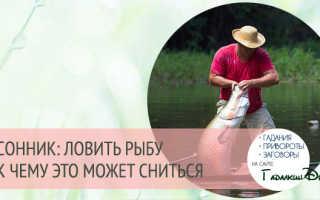 Поймать рыбу в мутной воде. Что значит ловить рыбу во сне отпускать, не поймать, есть ее. Факторы, влияющие на активность рыбы