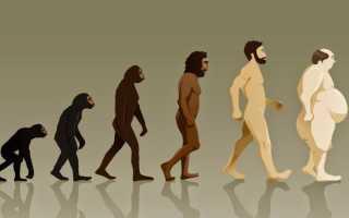 Можно ли стать мезоморфом. От эктоморфа к мезоморфу. Эволюция. Можно ли изменить тип телосложения