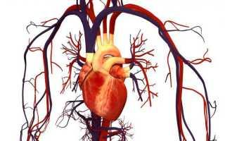 Уникальное свойство сердечной мышцы. Причины и характер боли. Движение крови по сосудам