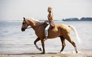 Верховая езда: польза и вред для здоровья