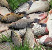 Заговор на удачную рыбалку. Заговоры бывалых рыбаков. Секреты удачной рыбалки