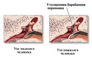 Общее количество мышц у человека более. Слух, обоняние, осязание. В зависимости от осуществляемых функций