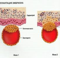 Йога для женской репродуктивной системы. Йога для лечения и профилактики женских заболеваний. Итак, женские асаны в йоге