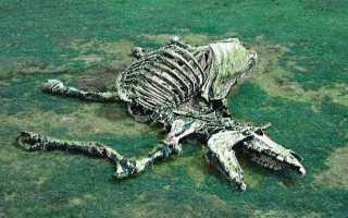 Сон мертвая лошадь. Cонник мертвая лошадь, к чему снится мертвая лошадь во сне видеть. Как давно это произошло
