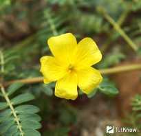Природные стероиды растительного происхождения. Природные анаболики. Какие продукты питания можно отнести к обладающим анаболическим действием