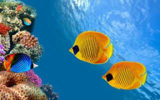 Почему рыбы не тонут? Плавательный пузырь у рыб