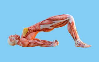 Упражнения кегеля и другие упражнения для мышц тазового дна. Упражнения для укрепления мышц тазового дна для женщин и мужчин. Что делать, если упражнения не дали эффекта