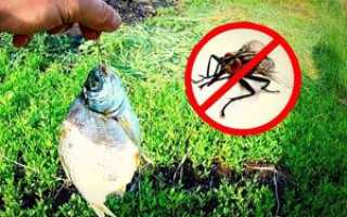 Рыба сушится. Защита от насекомых. Можно ли вялить рыбу в мороз
