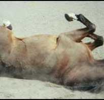 Конь не валялся происхождение выражения. Почему появилось выражение: конь не валялся