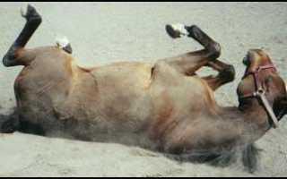 Конь не валялся. Значение фразеологизма «конь не валялся»: происхождение и особенности употребления