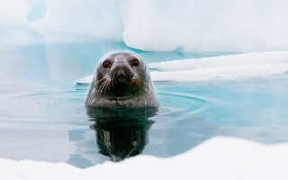 Известные люди моржи. «Моржи» получают зависимость от холодной воды. «Моржи» принимают алкоголь до и после купания