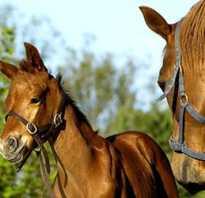 К чему снятся лошади и жеребенок. Лошадь с жеребенком по соннику. Что значит: приснилась лошадь. Трактование по Фрейду