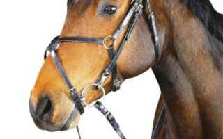 Как правильно надеть уздечку на лошадь. Советы по надеванию уздечки: теория и практика. Как надеть на лошадь уздечку